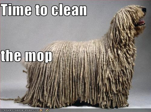 Time to clean  the mop