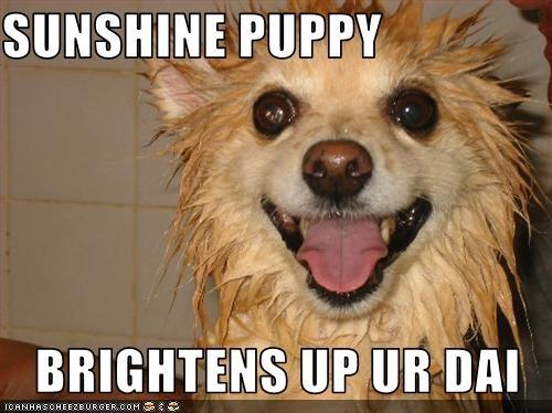SUNSHINE PUPPY  BRIGHTENS UP UR DAI