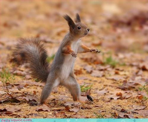 listening,squirrel,surprised