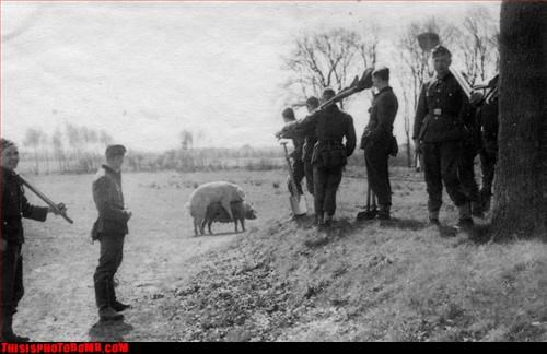 animal,caught in the act,mating,pig,soldier,vintage