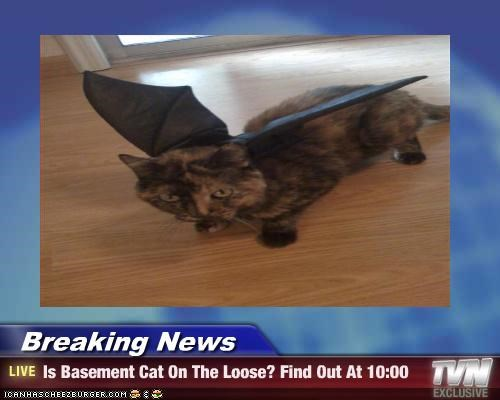 Breaking News - Is Basement Cat On The Loose? Find Out At 10:00