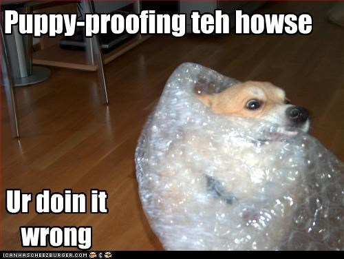 Puppy-proofing teh howse
