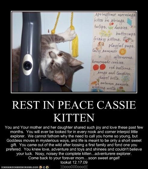 REST IN PEACE CASSIE KITTEN