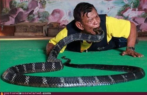 man,snake,swallowing,wtf