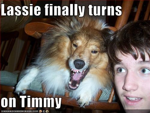 Lassie finally turns  on Timmy