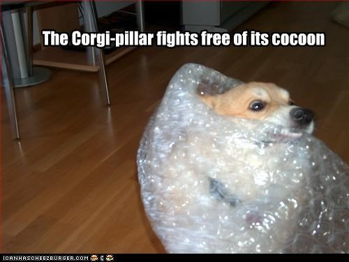 The Corgi-pillar fights free of its cocoon