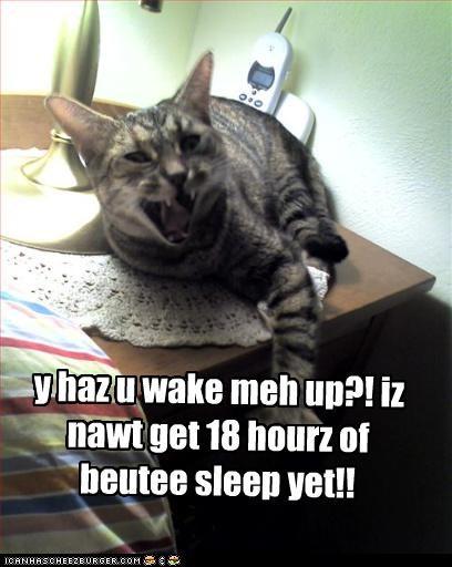 y haz u wake meh up?! iz nawt get 18 hourz of buty sleep yet!!