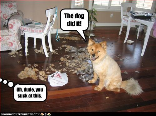 The dog did it!