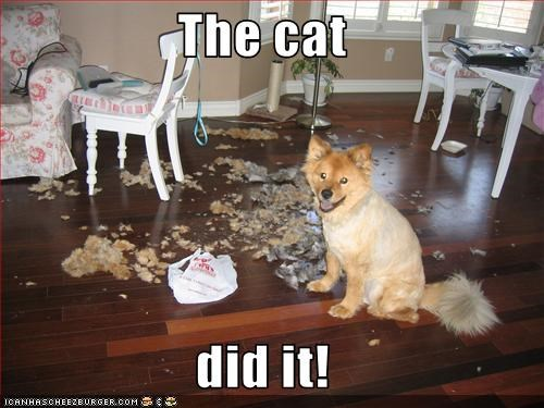 The cat  did it!