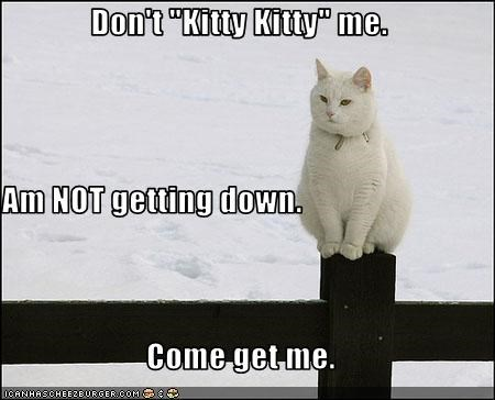 "Don't ""Kitty Kitty"" me. Am NOT getting down. Come get me."