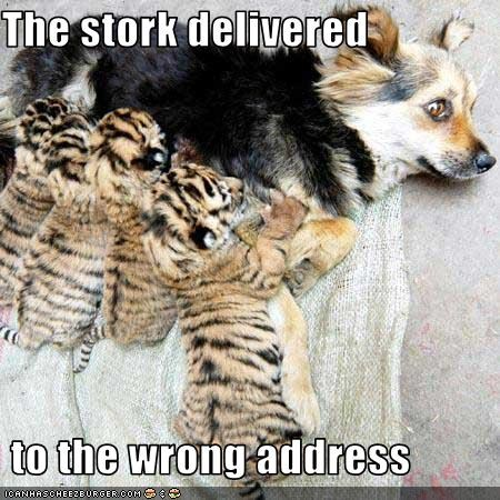 The stork delivered   to the wrong address