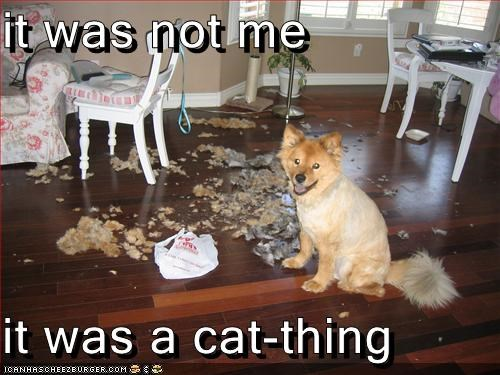 it was not me  it was a cat-thing