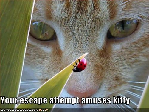 Your escape attempt amuses kitty