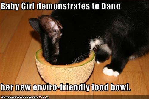 Baby Girl demonstrates to Dano  her new enviro-friendly food bowl.