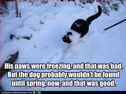 His paws were freezing, and that was bad. But the dog probably wouldn't be found until spring, now, and that was good.