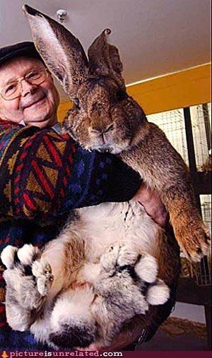 Easter Bunny,giant,rabbit,wtf