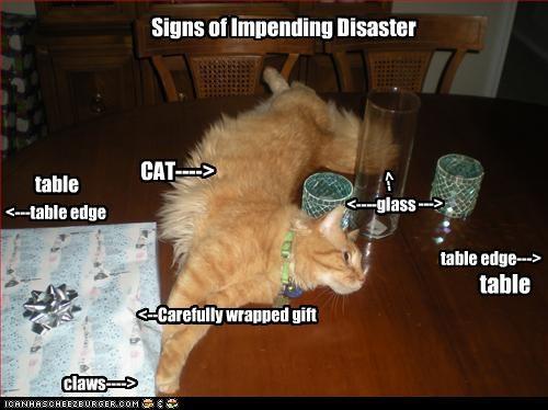 bad cat,danger,uh oh