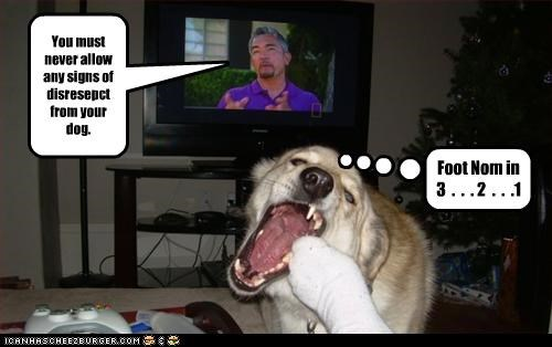 bad dog,bite,disrespect,FAIL,feet,foot,nom,the dog whisperer,whatbreed