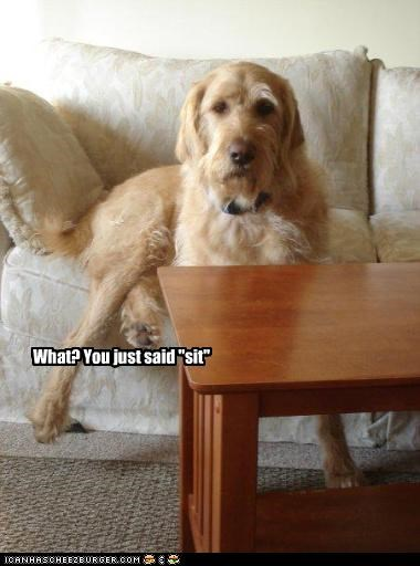 "What? You just said ""sit"""