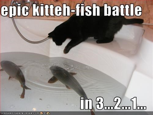 epic kitteh-fish battle  in 3...2...1...
