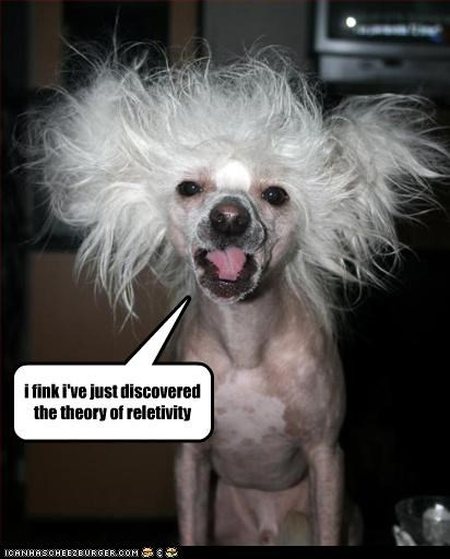 albert einstein,chinese crested,crazy,discovered,discovery,epiphany,hair,relativity,theory,thinking