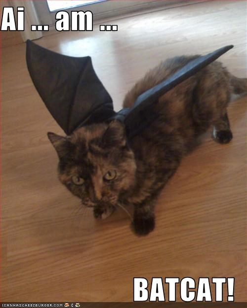 Ai ... am ...  BATCAT!