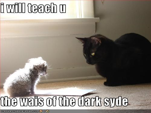 basement cat,cute,dark side,evil,kitten,teaching