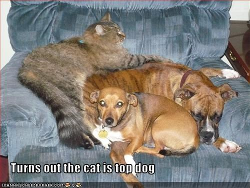 Turns out the cat is top dog