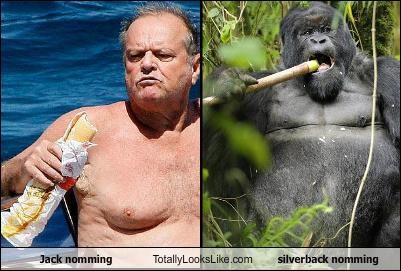Jack nomming Totally Looks Like  silverback nomming