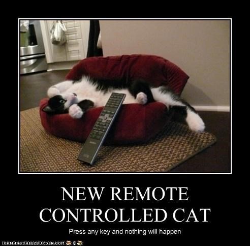 NEW REMOTE CONTROLLED CAT