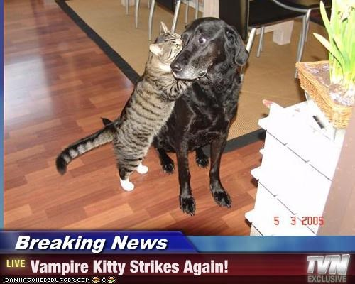 Breaking News - Vampire Kitty Strikes Again!
