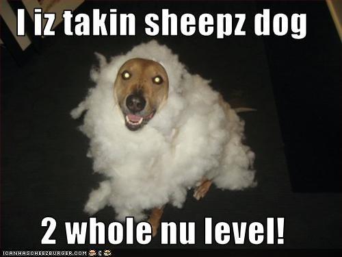 I iz takin sheepz dog  2 whole nu level!