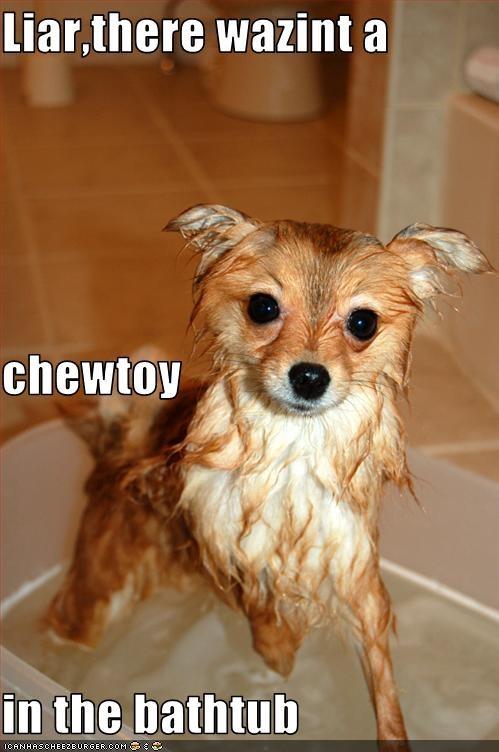Liar,there wazint a chewtoy in the bathtub