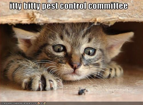 itty bitty pest control committee