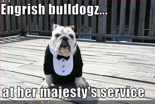 Engrish bulldogz...  at her majesty's service