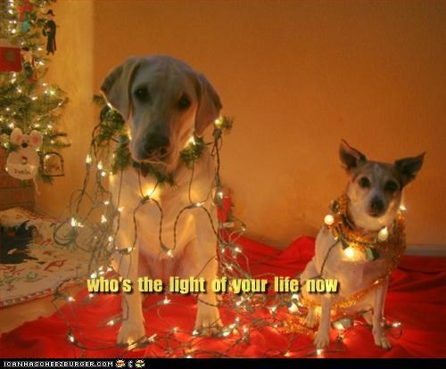 christmas,jack russel terrier,labrador,life,lights