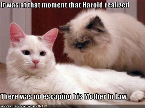 It was at that moment that Harold realized  There was no escaping his Mother In Law