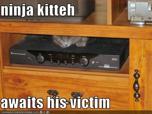 ninja kitteh   awaits his victim