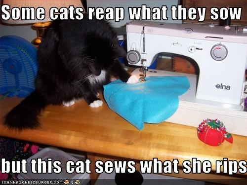 Some cats reap what they sow  but this cat sews what she rips