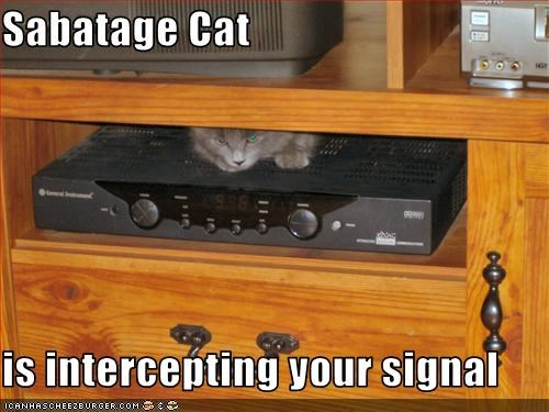 Sabatage Cat  is intercepting your signal