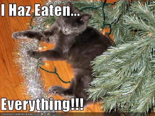 I Haz Eaten...  Everything!!!