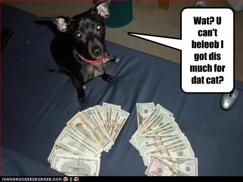 Wat? U can't beleeb I got dis much for dat cat?