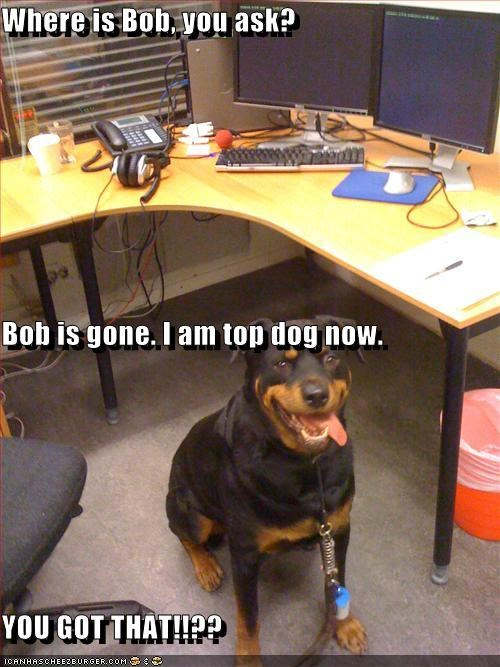 Where is Bob, you ask?  Bob is gone. I am top dog now. YOU GOT THAT!!??
