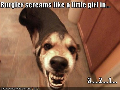 Burgler screams like a little girl in...  3.....2....1....