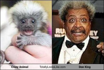 Crazy Animal Totally Looks Like Don King