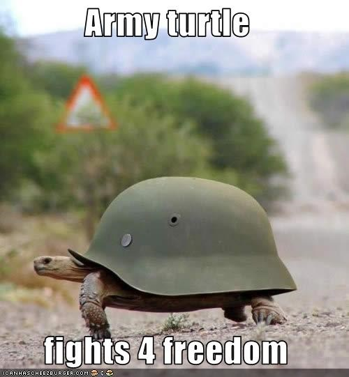 Army turtle  fights 4 freedom