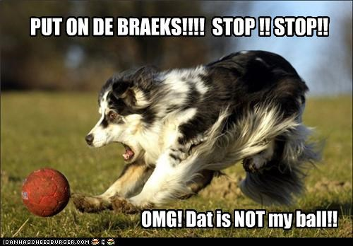 ball,border collie,breaks,Hall of Fame,mixed breed,puppy,stop