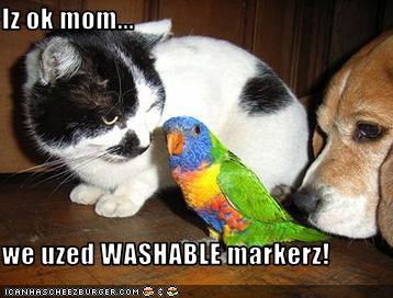 Art Project,beagle,cat,mischievous,parrot,washable markers