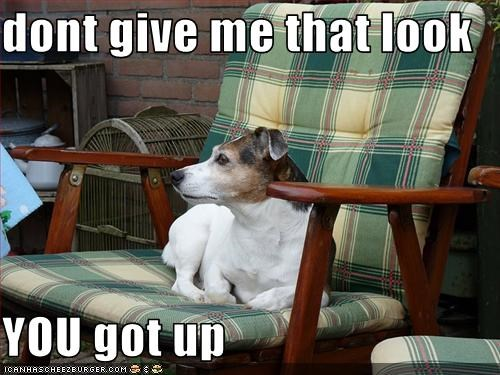 chair,human,seat,steal,up,whatbreed