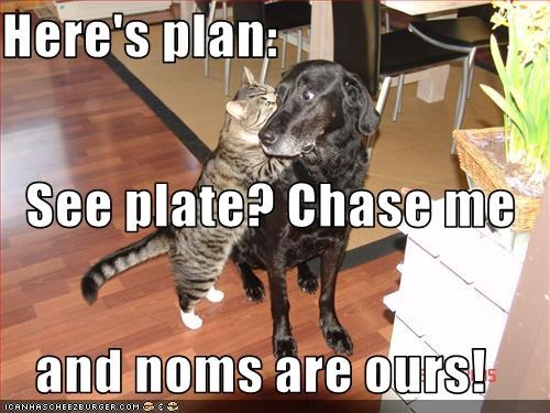 Here's plan:   See plate? Chase me  and noms are ours!